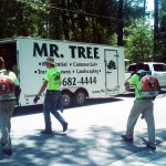 Gainesville tree company