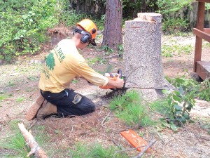 Gainesville Fl Tree Services