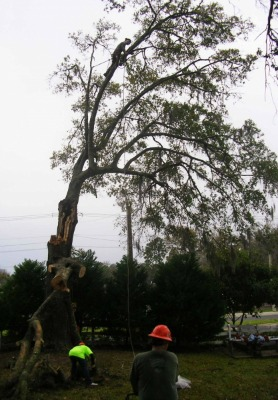 Tree Service Gainesville
