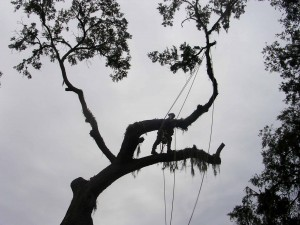 Gainesville tree removal
