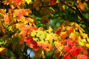 fall tree care in Gainesville