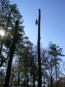 Gainesville FL tree removal