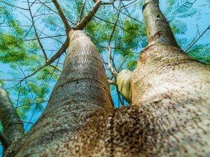 tree services in Gainesville FL