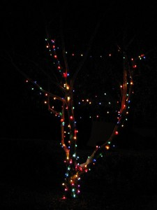 tree care and Christmas lights
