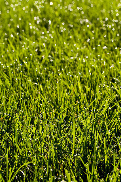 The best types of grass for north florida lawns - Grass lawn types make the right choice ...