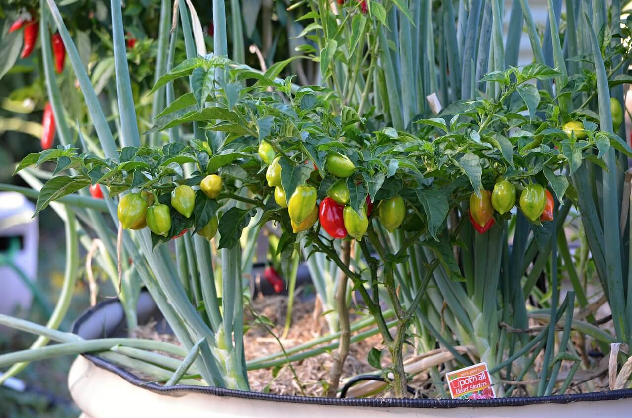The Best Edibles To Plant In Your Gainesville Garden