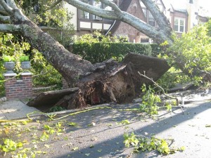 Gainesville storm tree removal