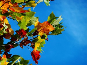 fall tree service in Gainesville FL