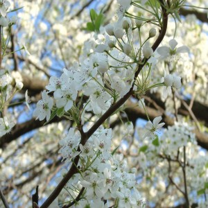 spring checklist- Gainesville tree services