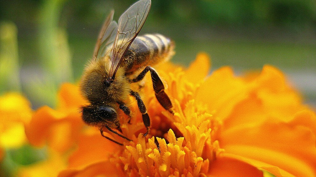 bee friendly gardening in Gainesville FL