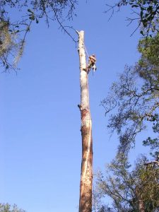 tree removal Gainesville Florida