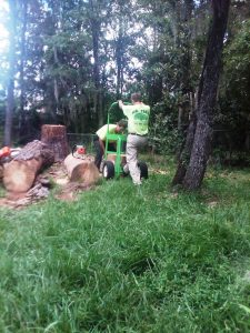 Gainesville tree services