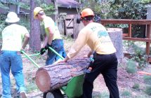 Tree Services in Gainesville, FL