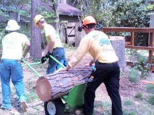 Tioga tree services