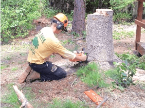Tree services with Mr. Tree and Lawn Service
