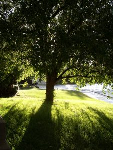 Tree services in Gainesville