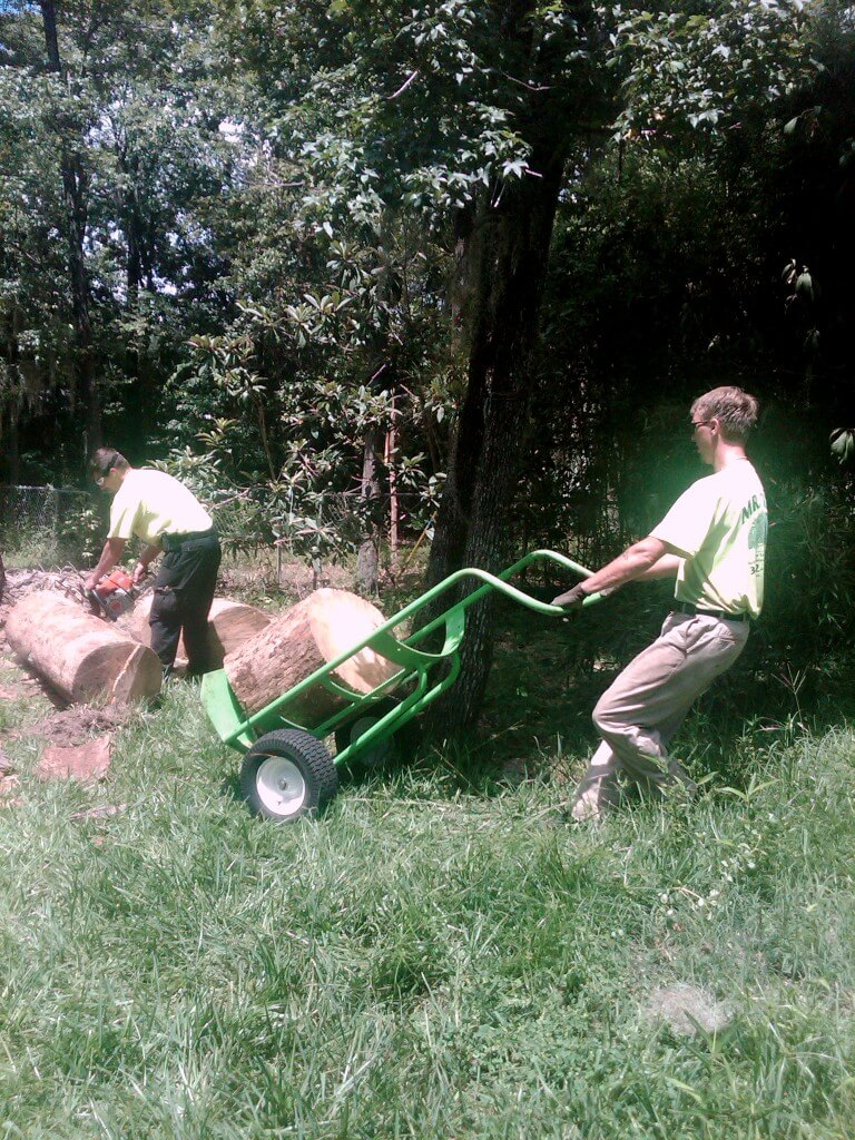 Gainesville tree maintenance with mr tree for Lawn and garden maintenance services