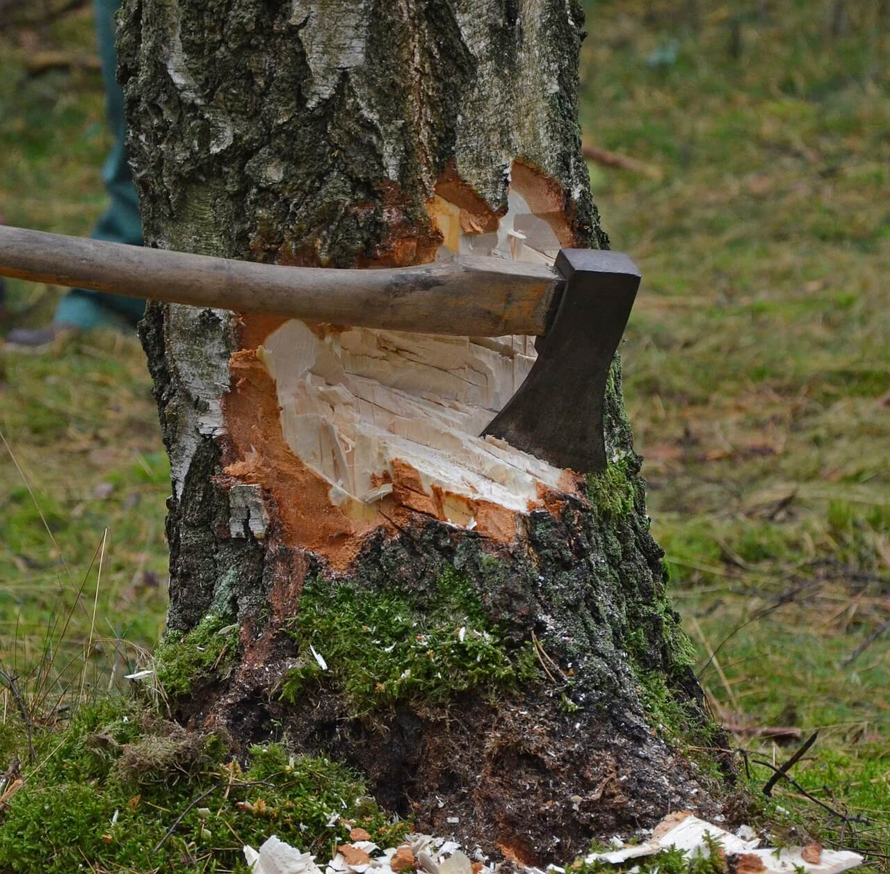 Cutting A Tree : Lawn care mr tree and service in gainesville fl