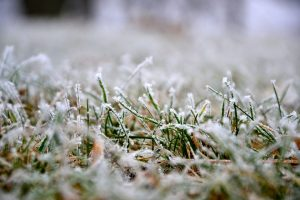 Overseeding Winter Lawns
