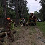 Crew Cutting and Mulching Trees