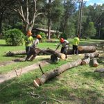 Men Moving Cutting and Moving Logs