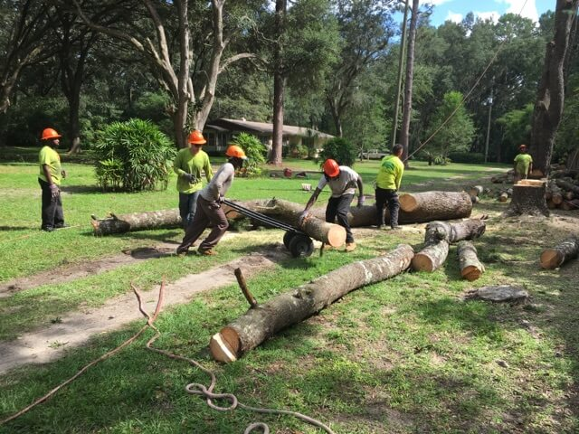 Tree Removal Amp Services In Gainesville Fl Mr Tree And