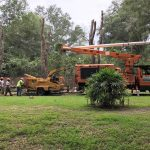 Tree Cutting Crews Working on Residential Lawn