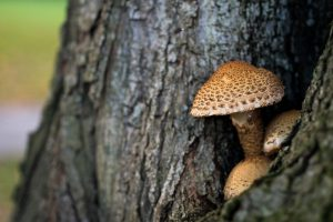Mushroom growing on a tree